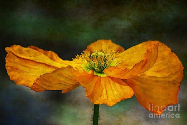 Poppies Digital Art - Orange Poppy by Zsuzsanna Szugyi