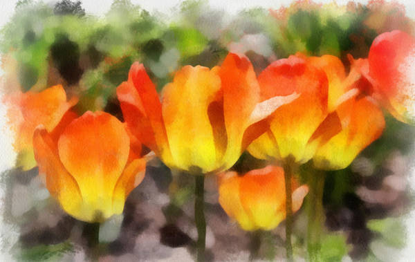 Photograph - Orange Tulips by Gerry Bates
