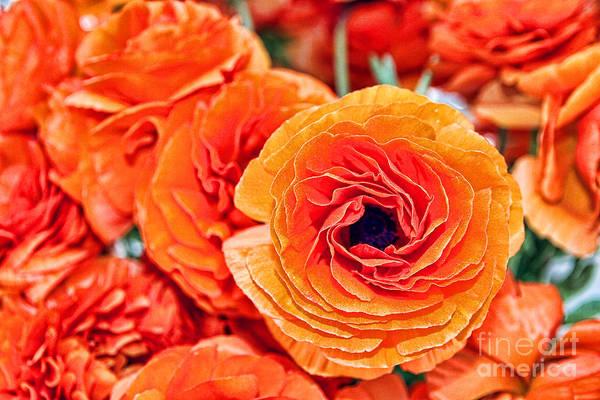 Photograph - Orange You Happy Ranunculus Flowers By Diana Sainz by Diana Raquel Sainz