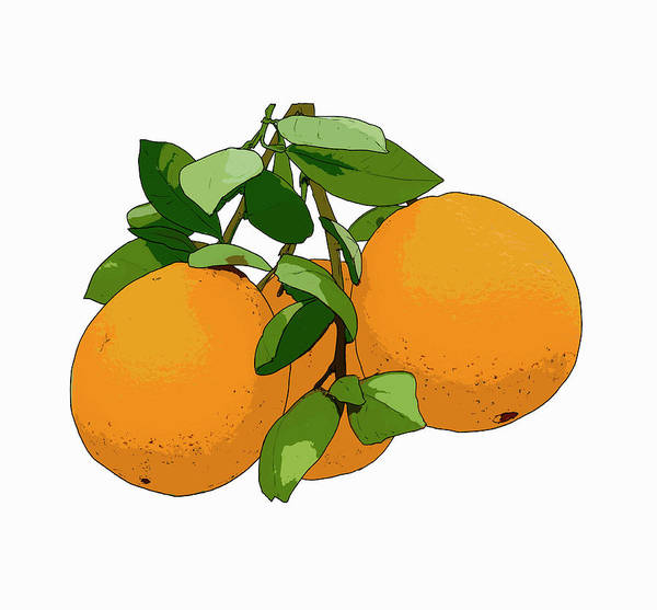 Wall Art - Photograph - Oranges by Ikon Ikon Images