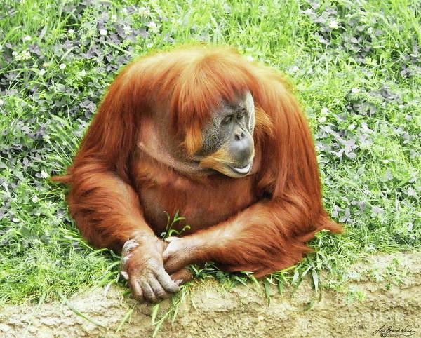Photograph - Orangutan By Half by Lizi Beard-Ward