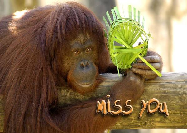 Miss You Photograph - Orangutan Female by Carolyn Marshall