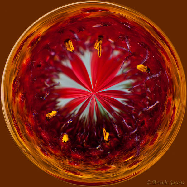 Photograph - Orb Image Of A Gaillardia by Brenda Jacobs