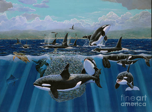 Monterey Bay Wall Art - Painting - Orca Play Re009 by Carey Chen