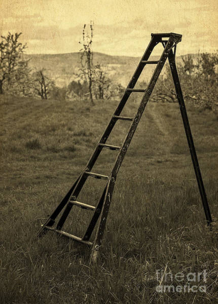 Ladders Photograph - Orchard Ladder by Edward Fielding
