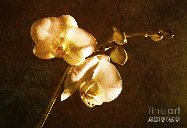 Pyrography - Orchid 1 by Mauro Celotti