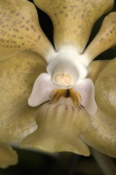 Photograph - Orchid 500 by Wesley Elsberry
