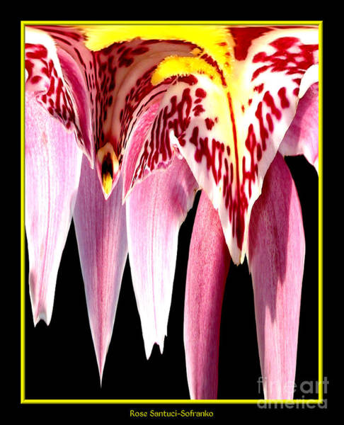 Photograph - Orchid Abstract by Rose Santuci-Sofranko
