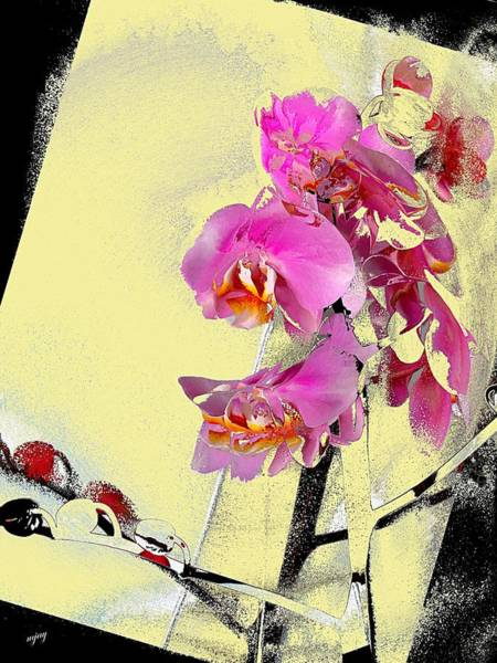 Orchid And Cream Art Print by Martin Jay