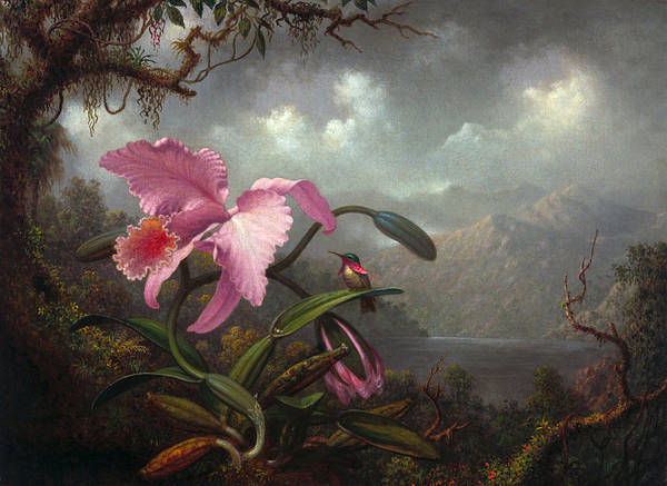 Humming Bird Wall Art - Painting - Orchid And Hummingbird by Martin Johnson Heade