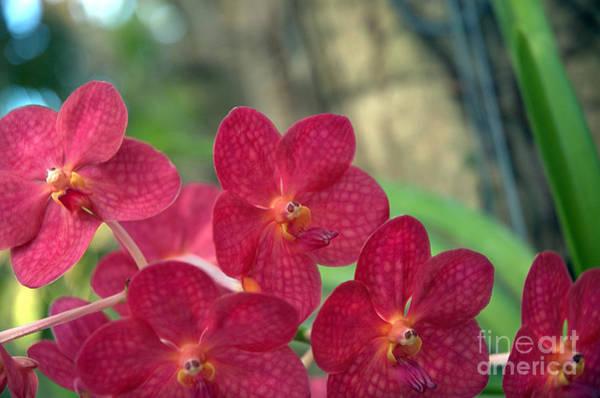 Orchid Bugs Art Print