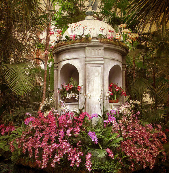 Photograph - Orchid Display by Jessica Jenney