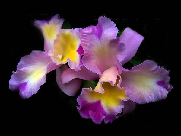 Orchid Embrace Art Print