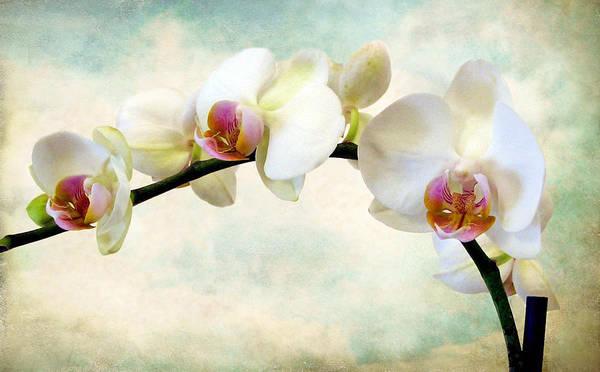 Orchid Heaven Art Print