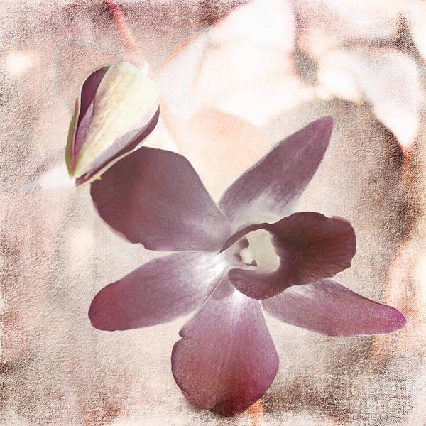Photograph - Orchid In Pastels by Ellen Cotton