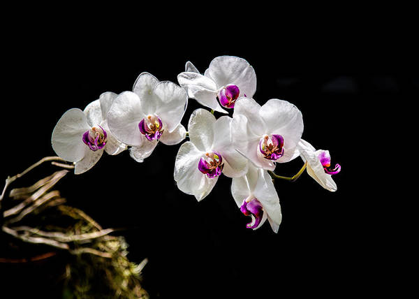 Wall Art - Photograph - Orchid by Keith Hutchings