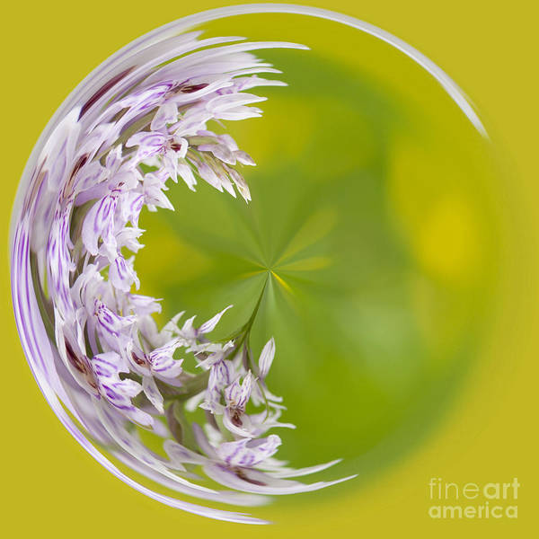 Orb Photograph - Orchid Moon by Anne Gilbert