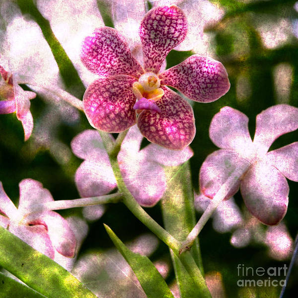 Photograph - Orchid Mystery by Kathi Shotwell