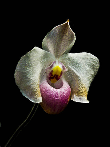 Photograph - Orchid On Black by Bill Barber