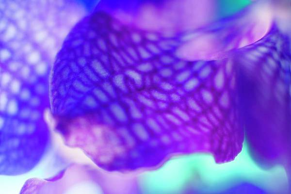 Wall Art - Photograph - Orchid Petals by Ian Hooton/science Photo Library