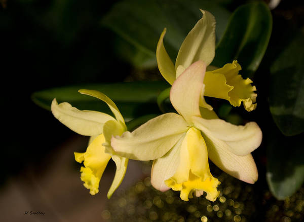 Photograph - Orchid Sunshine by Joanne Smoley