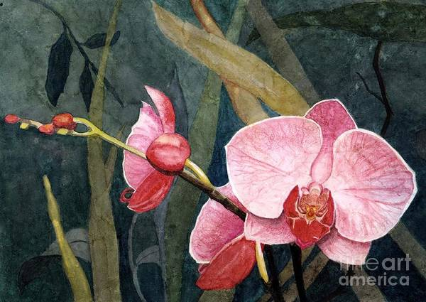 Wall Art - Painting - Orchid Trio by Barbara Jewell