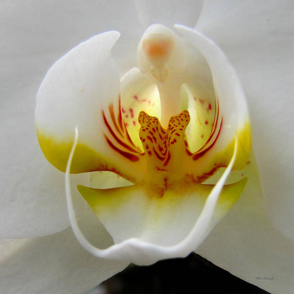 Photograph - Orchid Upclose Abstract by Duane McCullough