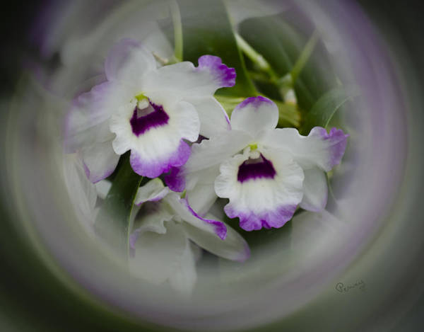 Photograph - Orchid Wine Swirl by Penny Lisowski