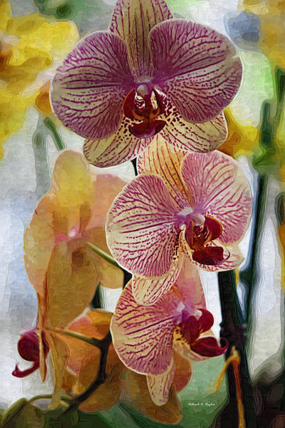 Photograph - Orchid Yellow by Deborah Hughes
