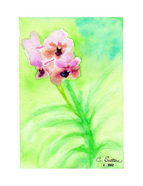 Painting - Orchids by C Sitton