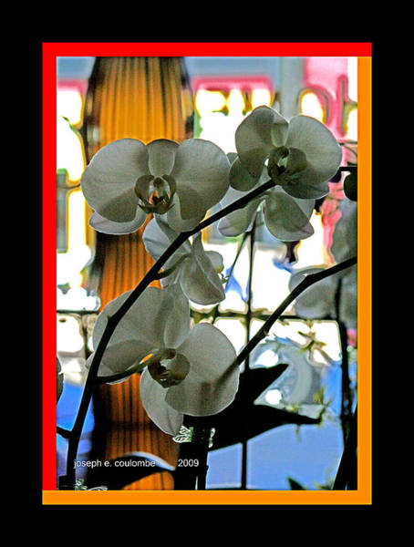 Digital Art - Orchids For A Lady by Joseph Coulombe