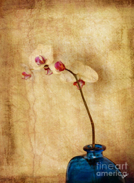 Photograph - Orchids II by Alana Ranney