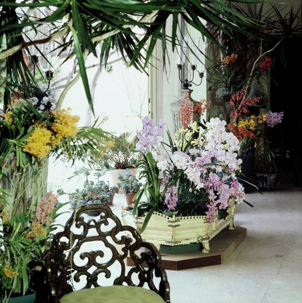 Fresh Photograph - Orchids In Enid Annenberg Haupt's Home by Horst P. Horst