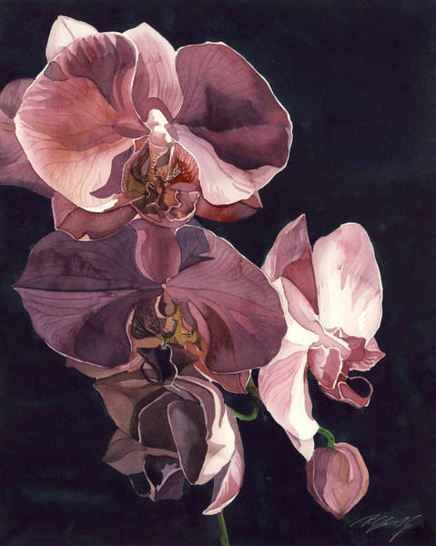 Painting - Orchids In Pink by Alfred Ng