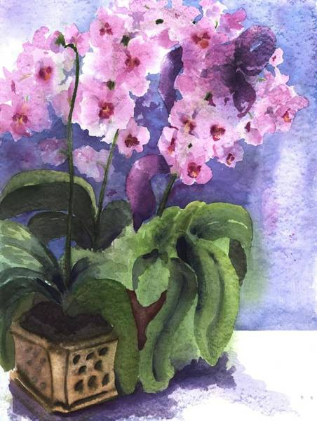 Potted Plant Painting - Orchids In The Window by Maria Hunt