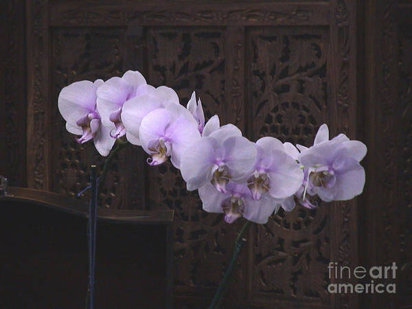 Photograph - Orchids Loretta by The Art of Alice Terrill