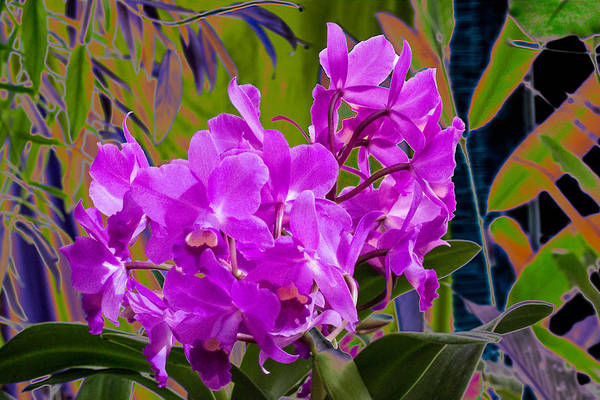 Photograph - Orchids by Richard Goldman