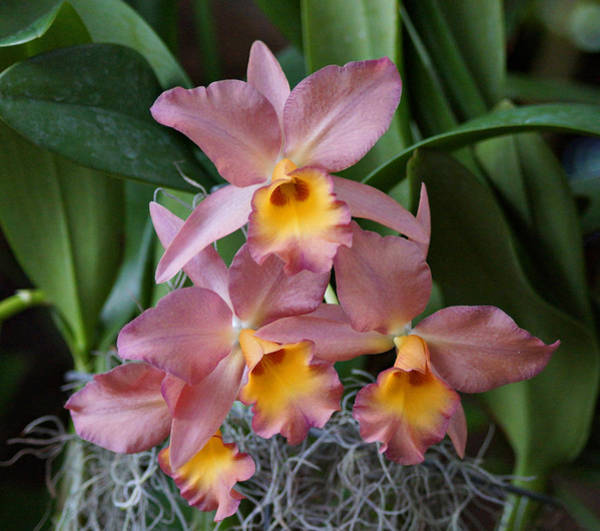 Photograph - Orchids by Sandy Keeton