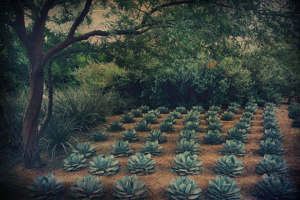 Rancho Mirage Photograph - Order by Laurie Search