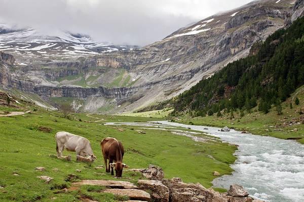 Pyrenees Photograph - Ordesa National Park by Bob Gibbons