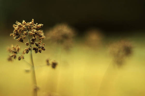 Photograph - Oregano Winter Warmth by Rebecca Sherman