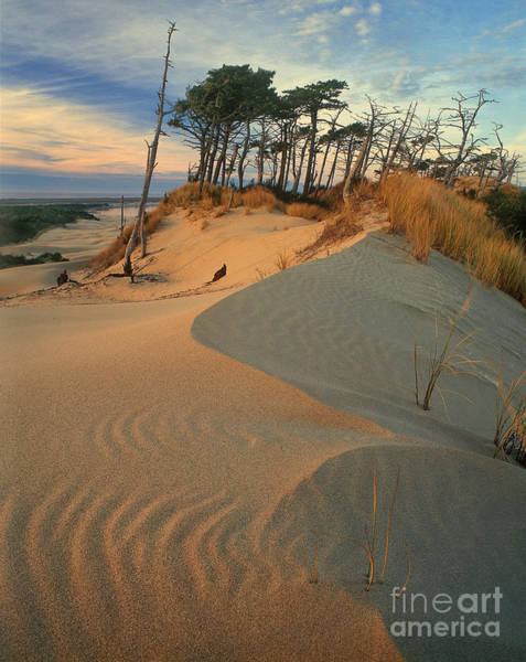 Photograph - Oregon Dunes National Recreation Area Oregon by Dave Welling