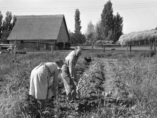 Wall Art - Photograph - Oregon Farming, 1939 by Granger