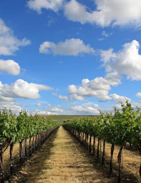 Photograph - Oregon Vineyard by Pat Moore