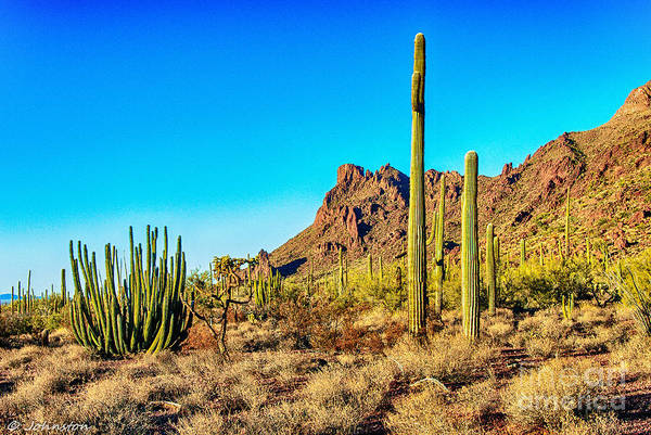 Photograph - Organ Pipe Cactus National Monument Late Afternoon by Bob and Nadine Johnston