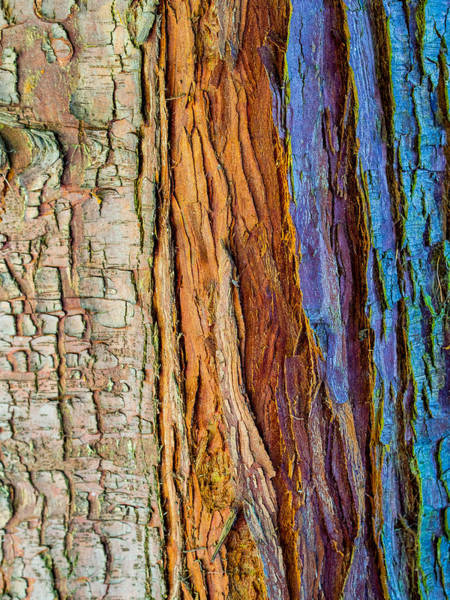 Hakon Photograph - Organic Bark Texture 11 by Hakon Soreide
