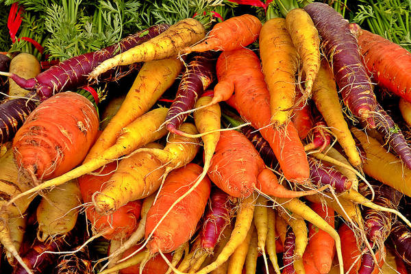 Purple Carrot Photograph - Organic Carrots by Brian Chase