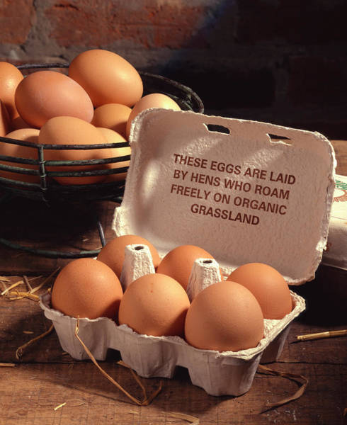 Free Range Photograph - Organic Eggs by Sheila Terry/science Photo Library