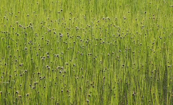 Photograph - Organic Green Grass Backround by Dreamland Media
