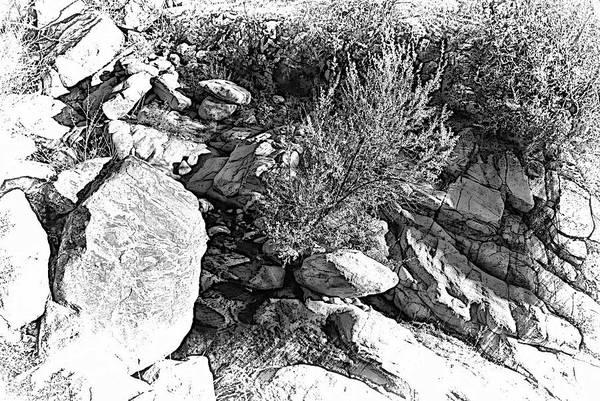 Photograph - Organic Lines by Randal Bruck